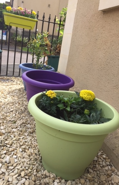 Colourful plant pots